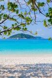 Ansicht des blauen Meeres von unterhalb des Baums Stockfotos