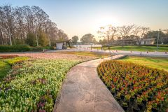 Ansicht des Blumengartens am neuen Morgen in Chiang Rai, Th lizenzfreie stockbilder