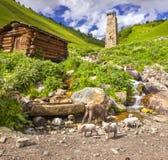 Ansicht des Dorfs Adishi Lizenzfreie Stockfotos