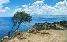 Ansicht des einsamen Baums und des Meeres Stockfotos