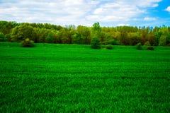 Ansicht des Feldes des grünen jungen Kornes mit Bäumen und des blauen Himmels mit Wolken Lizenzfreies Stockbild