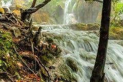 Ansicht des felsigen Wasserfalls mit Baumstümpfen in der Front Lizenzfreies Stockbild