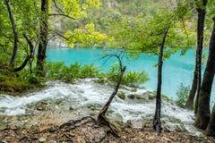 Ansicht des felsigen Wasserfallstromes mit Baumstümpfen und Bäumen in der Front Lizenzfreie Stockbilder
