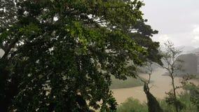 Ansicht des Flusses Mahaweli Ganga in Kandy im Regen stock video