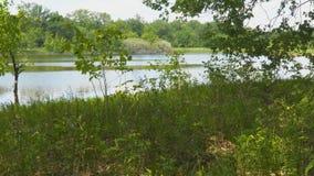 Ansicht des Flusses oder des Sees durch Niederlassungen und Blätter stock video