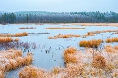 Ansicht des gefrorenen Sees mit einem trockenen gelben Gras und dem Holz auf einem späten Fall des Hintergrundes stockbilder