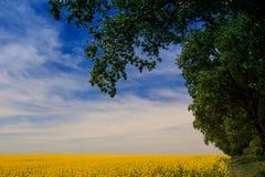 Ansicht des gelben Rapssamenfeldes in der Blüte unter blauem Himmel bewölkt sich Stockfotos