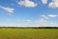 Ansicht des Getreideanbaus auf Ackerland Stockfotos