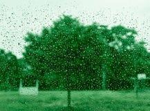 Ansicht des grünen Baumhintergrundes im Hinterhof am regnerischen Tag, Ansicht aus dem Fenster heraus Stockbilder