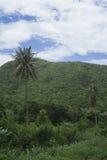 Ansicht des grünen Feldes, des Baums, des Kokosnussbaums und des grünen Berges mit blauem Himmel und Wolke, selektiver Fokus, nat Lizenzfreie Stockfotos