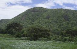 Ansicht des grünen Feldes, des Baums und des grünen Berges mit blauem Himmel und Wolke, selektiver Fokus, natürliche Farbbildart Lizenzfreie Stockfotos