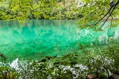 Ansicht des grünen transparenten Wassers mit sich hin- und herbewegenden Fischen Lizenzfreie Stockfotos