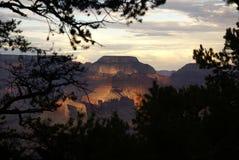 Ansicht des Grand Canyon mit Bäumen Lizenzfreies Stockbild