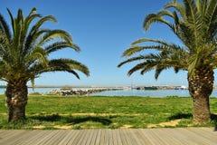 Ansicht des Hafens zwischen zwei Palmen Lizenzfreie Stockbilder