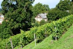 Ansicht des Hauses und des Weinbergs Lizenzfreie Stockbilder
