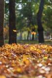 Ansicht des Herbststadtparks mit Bäumen und trockenen gelben Blättern lizenzfreie stockfotos