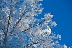 Ansicht des Himmels in einem schneebedeckten Wald Stockbilder