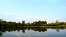 Ansicht des Himmels und der Bäume schnitt auf die Sümpfe Stockfotografie