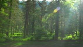 Ansicht des Holzes nave Schießen in der Bewegung Berggebiet stock footage