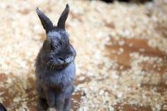 Ansicht des Kaninchens Stockfotografie