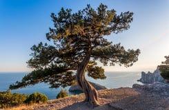 Ansicht des kleinen Baums des Baumstumpfes bei dem Sonnenuntergang, der über Seebucht überhängt Lizenzfreie Stockbilder