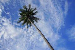 Ansicht des Kokosnussbaums und bewölkter blauer Himmel bei Malaysia setzen auf den Strand Stockbilder