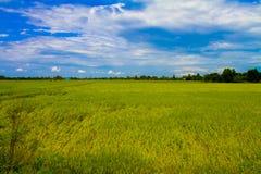 Ansicht des Landwirtschaftsbauernhoffeldes Stockfotografie