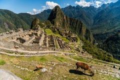 Ansicht des Machu Picchu Stockbild
