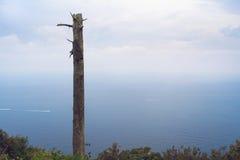 Ansicht des Mittelmeeres an einem nebelhaften Tag Toter Baum im Vordergrund Lizenzfreie Stockfotos