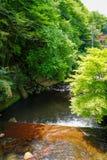 Ansicht des natürlichen frischen flüssigen Frühlingsstromes mit Steinbank durch glühende grüne Ahornbäume des Lichtes und des Wal Stockfotos
