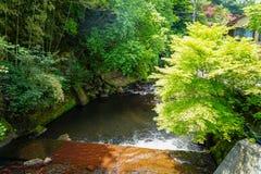 Ansicht des natürlichen frischen Frühlingsstromes mit Steinbank durch glühende grüne Ahornbäume des Lichtes, Wald und lokale Gebä Stockfotos