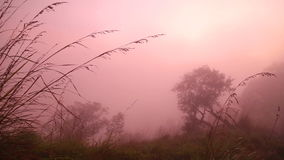 Ansicht des nebeligen Sonnenaufgangs auf der kleinen des Adams Spitze in Ella, Sri Lanka stock video footage