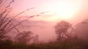 Ansicht des nebeligen Sonnenaufgangs auf der kleinen des Adams Spitze in Ella, Sri Lanka stock video