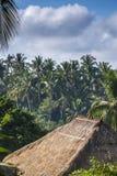 Ansicht des Palmedschungels und -hauses Lizenzfreies Stockbild