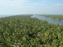 Ansicht des Palmenwaldes vom Dach Lizenzfreie Stockfotografie