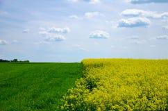 Ansicht des Rapsfelds und der Landschaft mit jungem Korn unter blauem Himmel mit Wolken Stockbilder