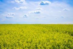 Ansicht des Rapsfelds unter blauem Himmel Lizenzfreie Stockfotos