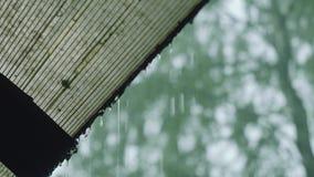 Ansicht des Regengusses im Wald am Sommertag stock video