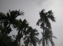 Ansicht des regnerischer Tagesbewölkten himmels mit Palmen Lizenzfreies Stockfoto