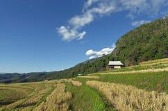 Ansicht des Reisbauernhofes, bewölkter Himmel durch lokale Leute im Berg, Nord Lizenzfreies Stockfoto