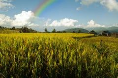 Ansicht des Reisbauernhofes, des bewölkten Himmels und des Regenbogens durch lokale Leute im Berg, nördlicher Teil von Thailand Stockfotografie