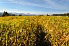 Ansicht des Reisbauernhofes, des Hauses und des bewölkten blauen Himmels durch lokale Leute im Berg, nördlicher Teil von Thailand Lizenzfreies Stockfoto