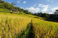 Ansicht des Reisbauernhofes, des Hauses und des bewölkten blauen Himmels durch lokale Leute im Berg, nördlicher Teil von Thailand Lizenzfreie Stockfotografie