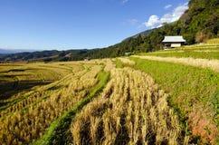 Ansicht des Reisbauernhofes und des bewölkten blauen Himmels durch lokale Leute im Berg Stockfotografie