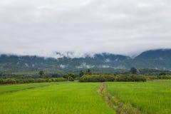 Ansicht des Reisfeldes Stockbild