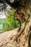 Ansicht des sandigen Abgrundes mit croocked Baumstümpfen und Wurzeln Stockbilder