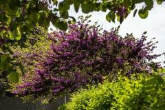 Ansicht des schönen blühenden Baums unter grünen Anpflanzungen stockfoto