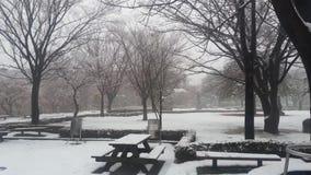 Ansicht des Schnees auf dem Boden und Bäume in einem allgemeinen Park während der Winterschneefälle würzen stock video