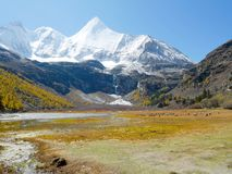 Ansicht des Schnees umfasste Bergspitzen und bharals oder blaues Schafglasieren stockfoto