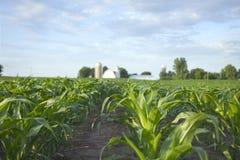Ansicht des selektiven Fokus des Getreidefelds und des Bauernhofes stockfotos